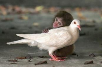 amitié (2)